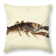 Fresh Water Crayfish Unsigned Sketches Attributed To William Buelow Gould Throw Pillow