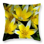 Fried Eggs Throw Pillow