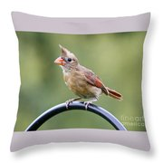 Friendly Female Cardinal  Throw Pillow