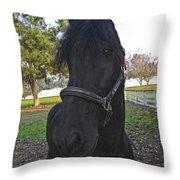 Friesian Horse Head Throw Pillow