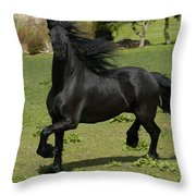 Friesian Horse In Galop Throw Pillow by Michael Mogensen
