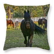 Friesian Horses - Pasture Throw Pillow