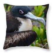 Frigate Bird In Nature Throw Pillow
