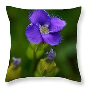 Fringed Gentian Throw Pillow