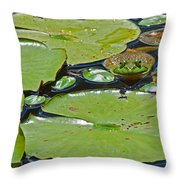 Frog Amongst The Lilypads Throw Pillow