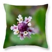 Frog Fruit 1 Throw Pillow