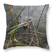 Frog Home Throw Pillow