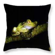 Frog Night Feeding Throw Pillow