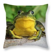 Frog On Flat Stone B  9871 Throw Pillow