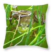 Frog Playing Hide N Seek Throw Pillow