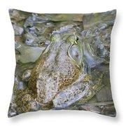 Frogs Eye View Throw Pillow