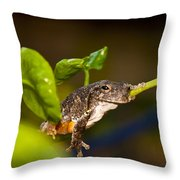 Frogs Life Throw Pillow