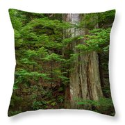 From Grove Of The Patriarchs 2 Throw Pillow