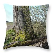 From Old Springs New Throw Pillow