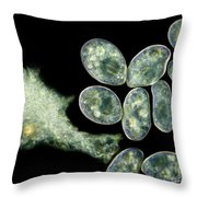 Frontonia Sp. Protozoa, Lm Throw Pillow