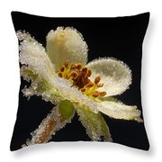 Frost On The Flower Throw Pillow