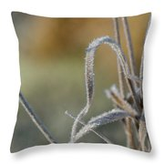 Frost On The Stems Throw Pillow