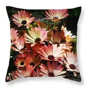 Frosted African Daisies Throw Pillow