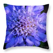 Frosted Blue Pincushion Flower Throw Pillow