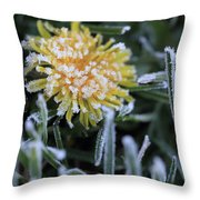 Frosted Not Glazed Throw Pillow