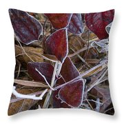 Frosted Red Green Briar Throw Pillow