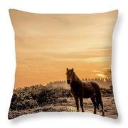 Frosty Pony Throw Pillow