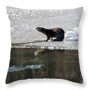 Frosty River Otter  Throw Pillow