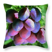 Fruit Plums  On Tree Throw Pillow