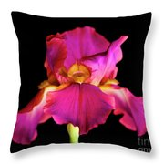 Fuchsia Iris Throw Pillow