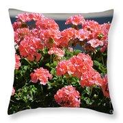 Full Bloom Geraniums  Throw Pillow