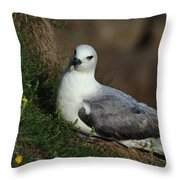 Fulmar Nesting On Cliff Throw Pillow