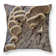 Fungui Growing On A Tree Trunk Throw Pillow