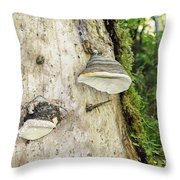 Fungus Grows On A Tree Trunk Throw Pillow