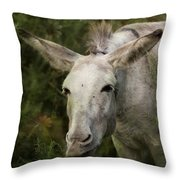 Funky Donkey Throw Pillow