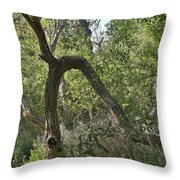 Funky Tree On Trail In Peters Canyon Throw Pillow