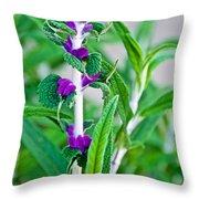 Salvia At Pilgrim Place In Claremont-california  Throw Pillow