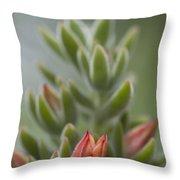 Fuzzy Orange Succulent Blossom Throw Pillow