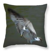 Gabriel The Gull Throw Pillow