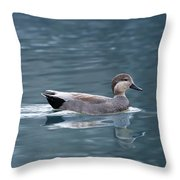 Gadwall On Blue Throw Pillow