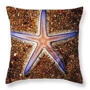 Galapagos Colorful Seastar Throw Pillow