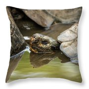 Galapagos Giant Tortoise In Pond Behind Another Throw Pillow