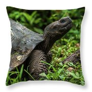 Galapagos Giant Tortoise In Profile In Woods Throw Pillow