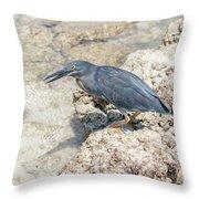 Galapagos Heron In Santa Cruz Island, Galapagos. Throw Pillow