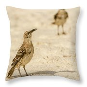 Galapagos Hood Mockingbird Throw Pillow