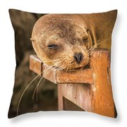 Galapagos Sea Lion Sleeping On Wooden Bench Throw Pillow