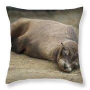 Galapagos Sea Lion Sleeps On Sandy Beach Throw Pillow