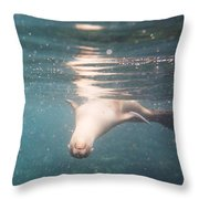 Galapagos Sealion Throw Pillow