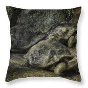 Galapagos Tortoise_hdr Throw Pillow