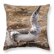 Gannet Chick 1 Throw Pillow