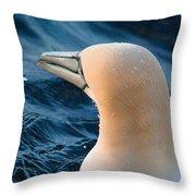 Gannet Swim 3 Throw Pillow